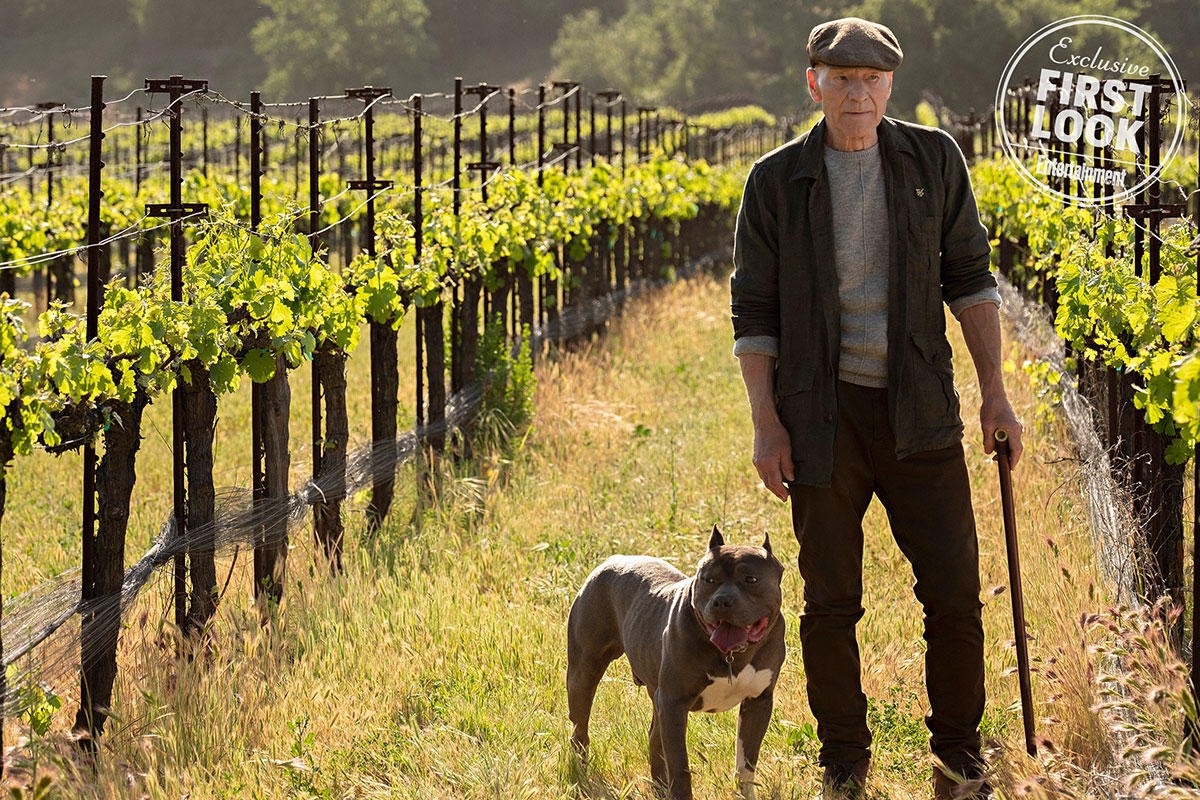 The Trailer for Star Trek: Picard Is Everything We Ever Wanted